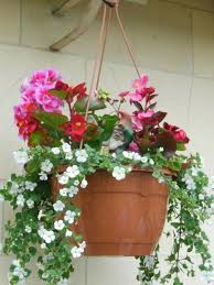 Photo of Hanging baskets project hits the news