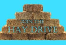 Hay Drive Wynnum